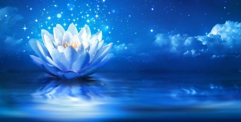 opening flowers -Meditative Musik für tiefe Entspannung